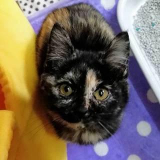 写真より実物はもっと可愛いサビ猫ちゃん