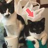 マスクのお顔が魅力的な、黒白猫さん サムネイル5