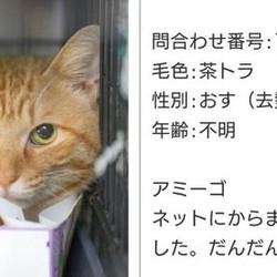猫の譲渡会 サムネイル2