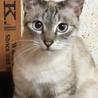 人も猫も大好き。おやつに目がない食いしん坊。