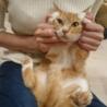 猫も人も大好き☆ゴマちゃん推定4歳 サムネイル2