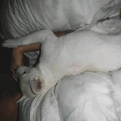 寝て遊んで寝て