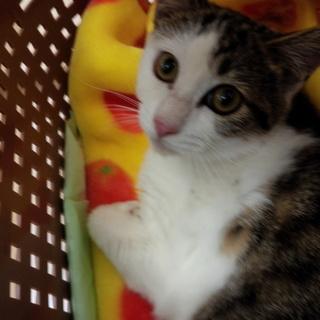 地域猫レスキュー♥ミミちゃん