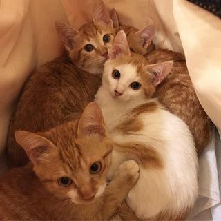 無事成長してくれていた子猫たち