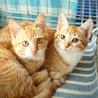 無事成長してくれていた子猫たち サムネイル2
