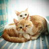無事成長してくれていた子猫たち サムネイル4