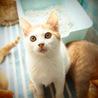 無事成長してくれていた子猫たち サムネイル5