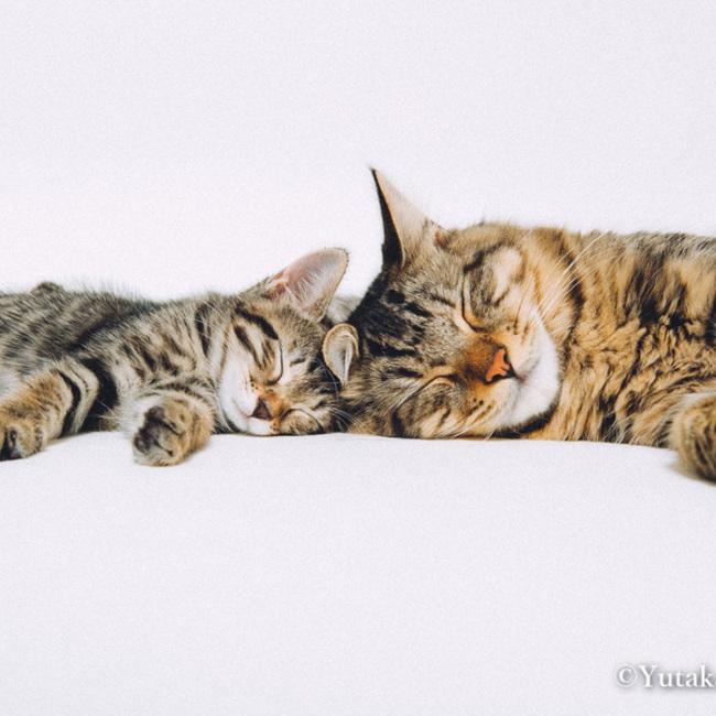 イヌとネコとヒトの写真館のカバー写真