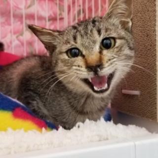 募集停止 鼓膜が破れていた子猫