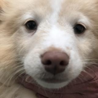 モフモフ可愛い子犬の男の子♪生後3カ月位です