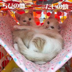 保護ネコ譲渡会 サムネイル2