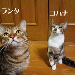 保護ネコ譲渡会 サムネイル3