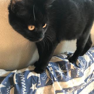 1歳未満 黒猫美少女アリちゃん