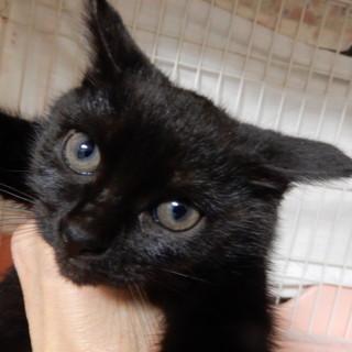 お転婆さんの黒猫ちびちゃん!