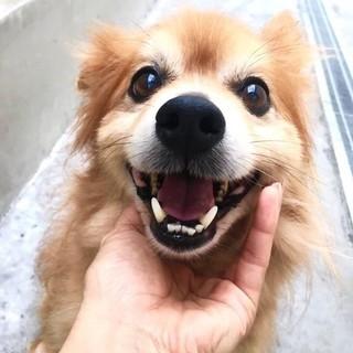 抱っこ大好きなししまる。可愛い笑顔がトレードマーク