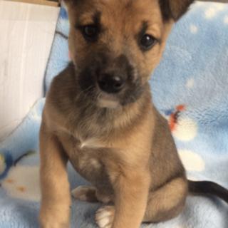 子犬 メス 2カ月