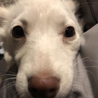 可愛い子犬の女の子♪小さ目な子です
