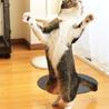 お留守番できるよ! 見て見て! ダンスもできるよ! サムネイル3