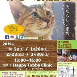 第3回HappyTabbyClinic猫の譲渡会