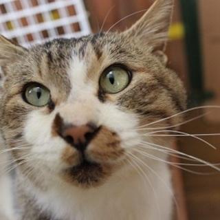 大崎市で保護しました。成猫のジミー君です。