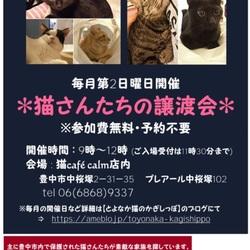 ◎大阪府豊中市・2019年1月13日(日)猫さんたちの譲渡会開催◎