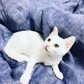 元気印の子猫くん☆(生後2~3ヵ月)