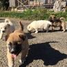 生後2ヶ月4兄弟の子犬(No.2 シロ♂) サムネイル3