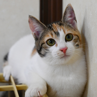 三毛美少女