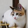 三毛美少女 サムネイル3