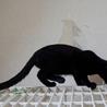 黒ヒョウのような黒猫 サムネイル2