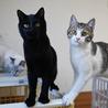 黒ヒョウのような黒猫 サムネイル5