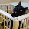 黒ヒョウのような黒猫 サムネイル6