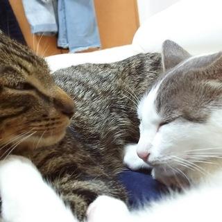 子供の猫2匹、とても可愛らしい子達です。