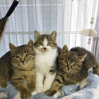 とてもかわいい美人三姉妹です!