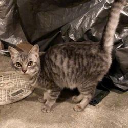 1月7日から行方不明の猫を探しています