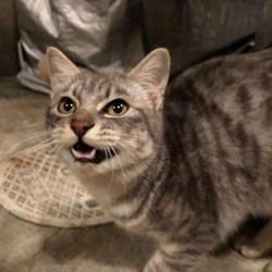 1月7日から行方不明の猫を探していますサムネイル
