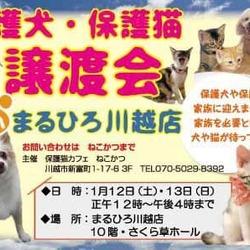 保護犬・保護猫譲渡会inまるひろ川越店 サムネイル1