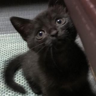 黒猫の女の子です