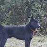 黒虎牡 サムネイル2