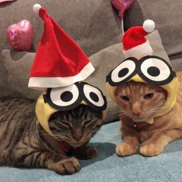 また… クリスマスバージョン