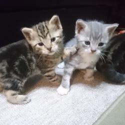 子猫たちの成長