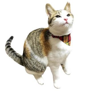 美人な三毛猫さん!