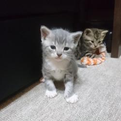 「子猫たちの成長」サムネイル2