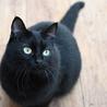 ふっくら丸マルした黒猫くん サムネイル2