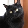 ふっくら丸マルした黒猫くん サムネイル3