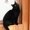 ふっくら丸マルした黒猫くん サムネイル4