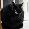 ふっくら丸マルした黒猫くん サムネイル5
