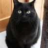 ふっくら丸マルした黒猫くん サムネイル6