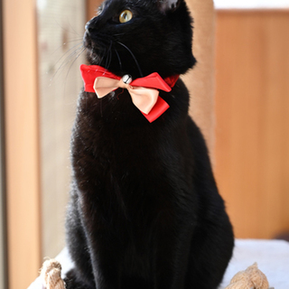 ちょっとドンくさい黒猫くん
