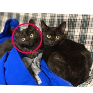 可愛い黒猫ちゃんです!
